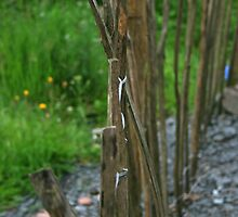 Rickety Fence by Justine Humphries