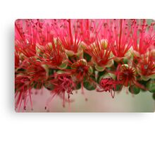Bottle Brush Canvas Print