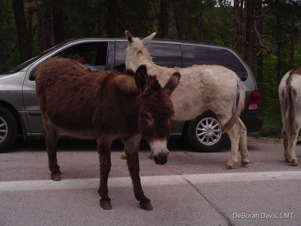 Friendly Donkey by DeBorah Davis, LMT