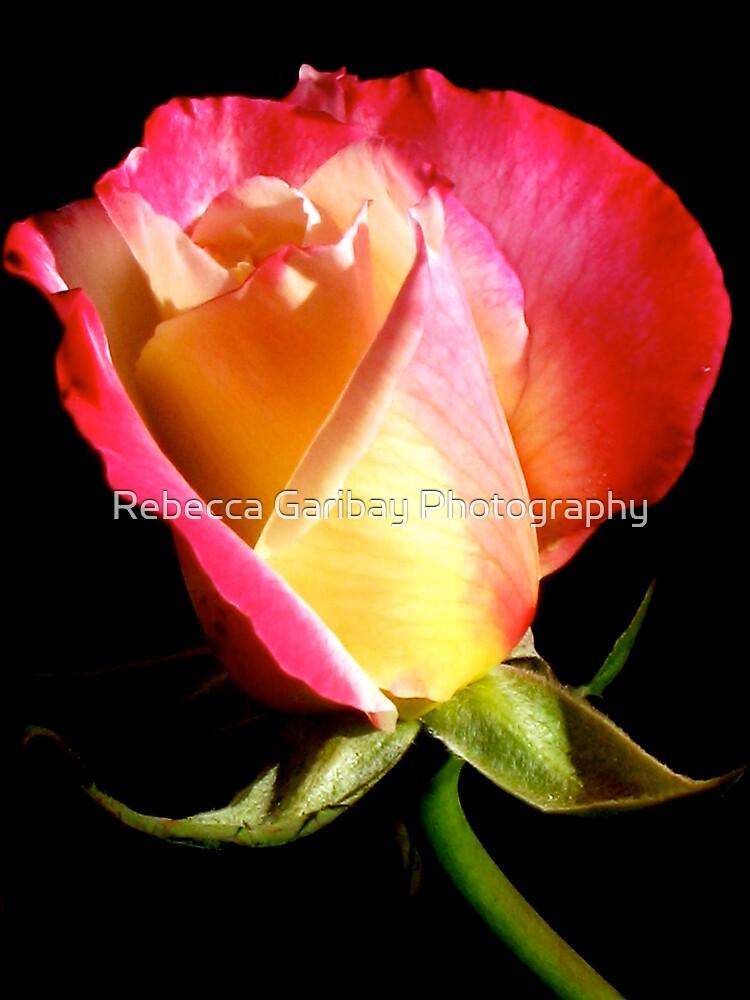 PINK petals  by Rebecca Garibay Photography