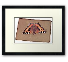 Grunge butterfly background Framed Print