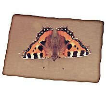 Grunge butterfly background Photographic Print