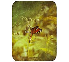 Grunge butterfly background 2 Photographic Print
