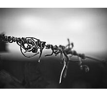Antinori Vine Photographic Print