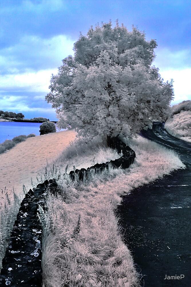 Tree White by JamieP