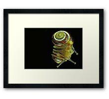 Snail Framed Print
