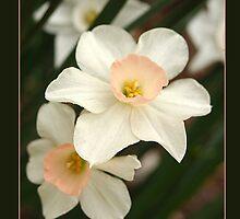 Pink Daffodill by Teddie McConnell