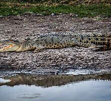 Crocodile Reflection by Russell Charters