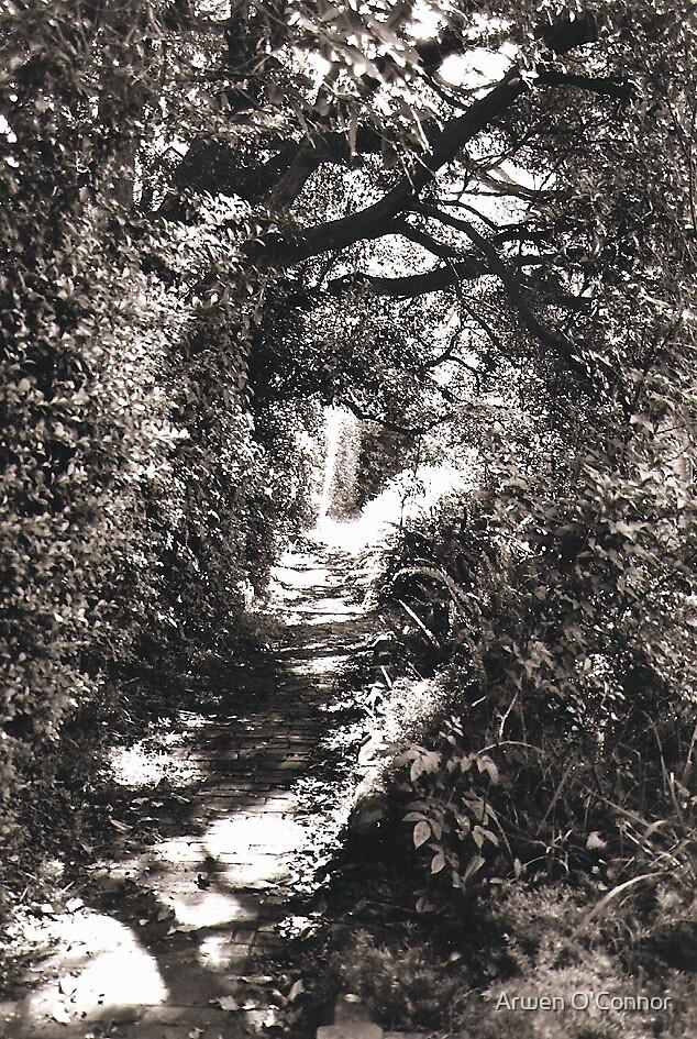 Garden Path; Gore Hill Cemetery by Arwen O'Connor