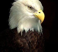 Painted Bald Eagle by Kirk Allemand