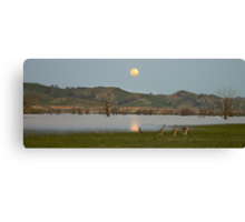Roos in the Moonlight Canvas Print