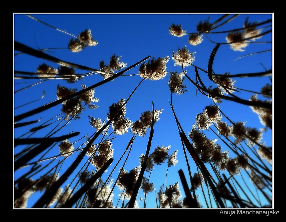 Till wind blow us apart.. by Anuja Manchanayake