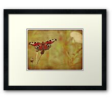Grunge butterfly background 3 Framed Print