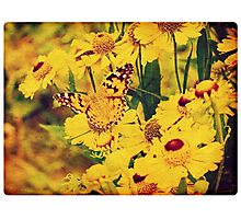 Grunge butterfly background 5 Photographic Print