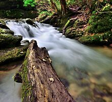 Flowing water at Janet's Foss by Gary Kenyon