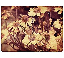 Grunge butterfly background 6 Photographic Print
