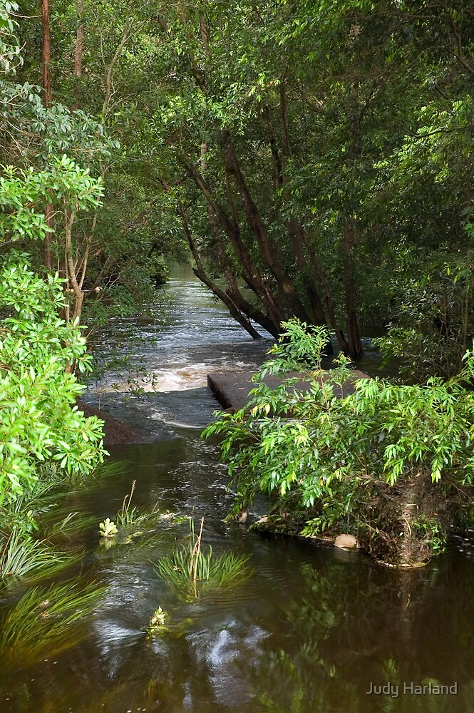 Stream near Cooroy by J Harland