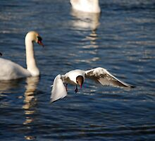 AFTERNOON LANDING by kevman