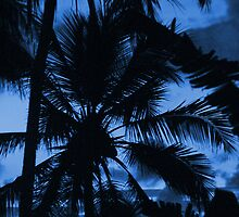 Blue Sky Palm by Kylie Reid