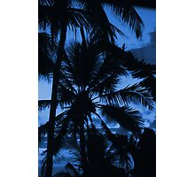 Blue Sky Palm Photographic Print