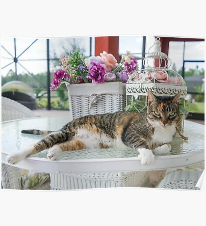 Tabby  - The Kitty Cat Poster