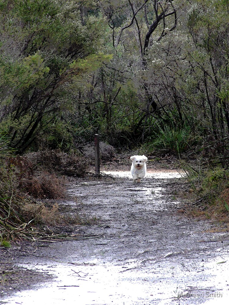Path to Goblin Swamp, near Pemberton Western Australia by Maureen Smith