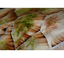 Turtle Shell 2 Photographic Print