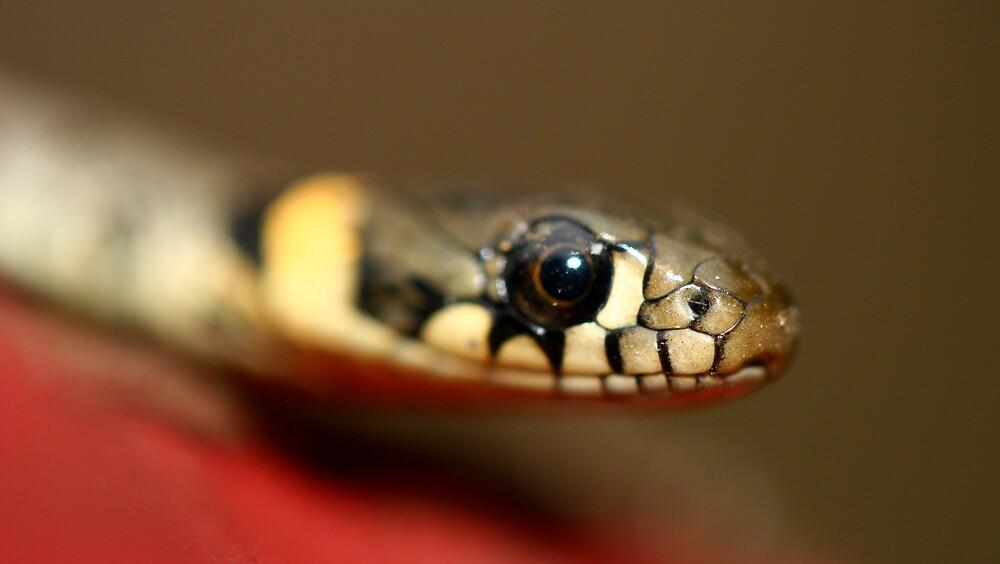 snake eyes 2 by fandango23