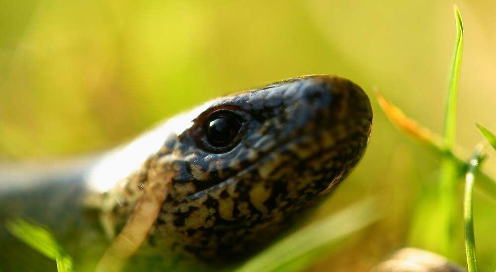 slow worm by fandango23