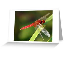 Nature's helicopter Greeting Card