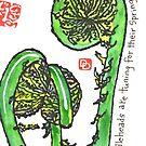 Fiddlehead Ferns by dosankodebbie