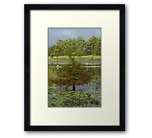 Lake MacDonald, Cooroy Framed Print