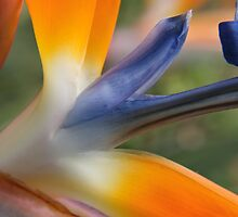 Bird of Paradise by ottz0