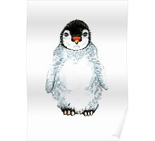 Molly the baby penguin  Poster