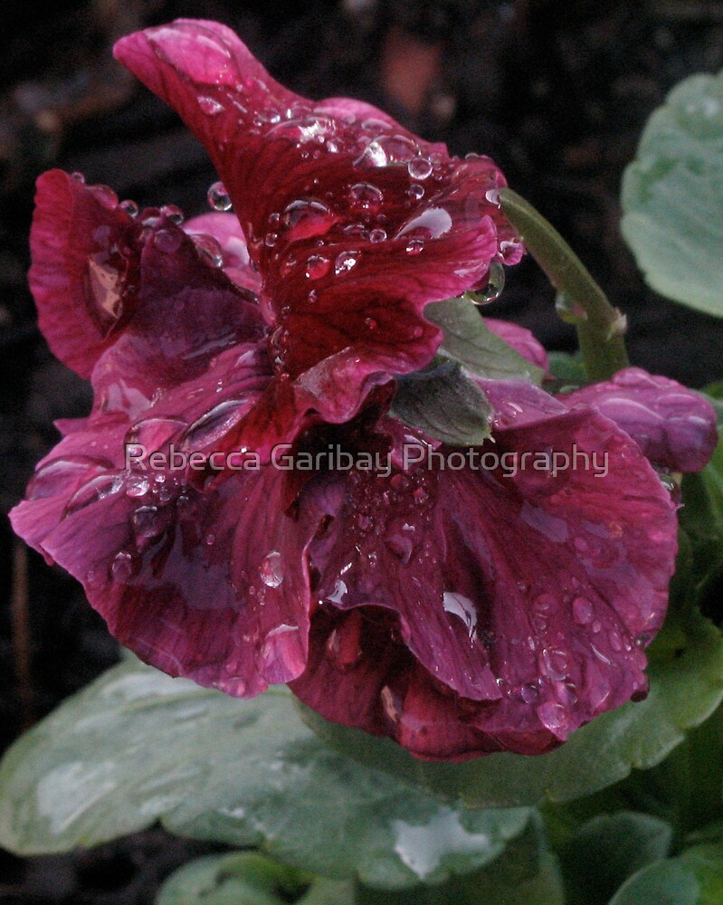 Water drops on the surface by Rebecca Garibay Photography