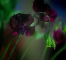 SWEET PEA................ by Arthur Chambers