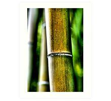 Big Bamboo Art Print