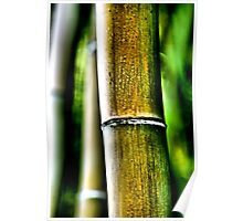 Big Bamboo Poster