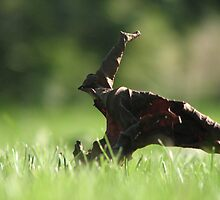 The First To Fall by HelenBanham