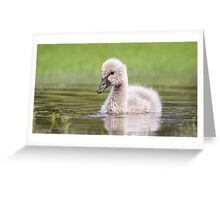 Cygnet in a puddle Greeting Card