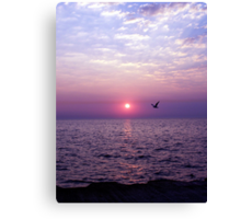Morning Flight Canvas Print