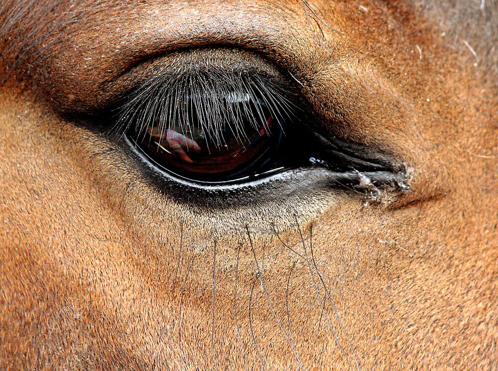 Horse's Eye  by HelenBanham