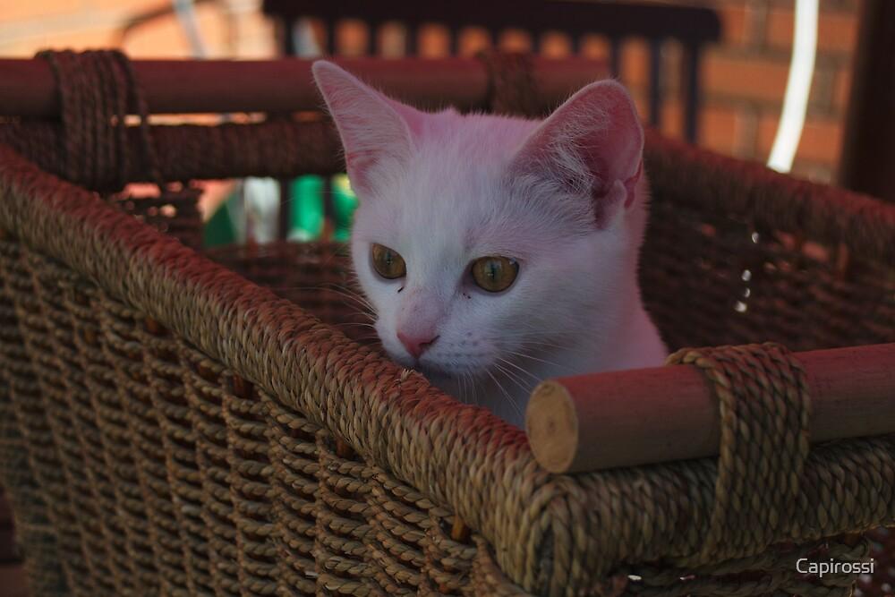 Kitty hamper by Capirossi