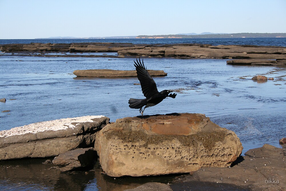 a crow's take off by nikka