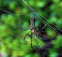 The Exotic Spider IV - Hong Kong. by Tiffany Lenoir