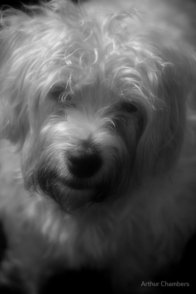 My dog Bramble/////////// by Arthur Chambers