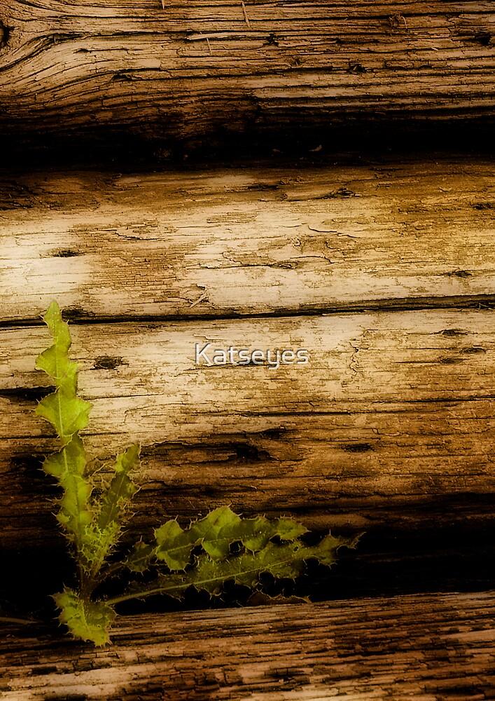 TENACITY by Katseyes