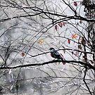 Winter Approaching  by John Rivera