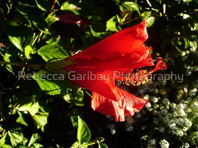 Red Garden by Rebecca Garibay Photography