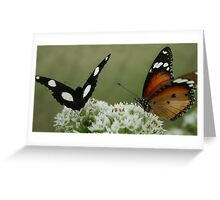 """Hypolimnas misippus"" & Danaus chrysippus"" Dining together Greeting Card"